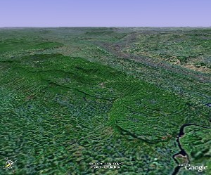 Bamboo Forest - Google Earth