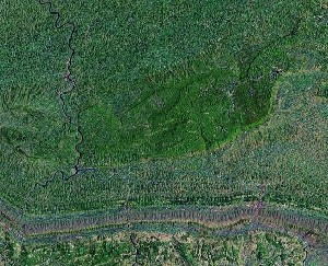 Bamboo Forest - Google Satellite Photo